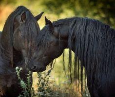 Sharing thistles. photo: Laura Zugzda.