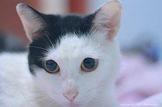 """Acordar com esses """"zoios"""" grandes... #cats #catsofinstagram #gatos"""