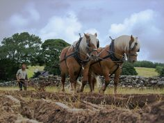 Heavy Horse Ploughing.   Eryrys Vintage Gathering, North Wales 2010.