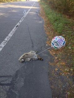 Get Well Soon, Raccoon. This is kinda sick' but hilarious!