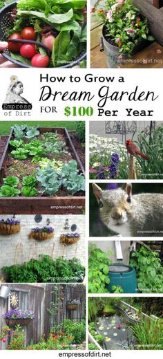 How to grow a dream garden for 100 dollars a year. These cheap (inexpensive) and creative garden ideas are offered for anyone starting a new garden on a very low budget.