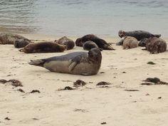Seal Beach in San Diego, CA
