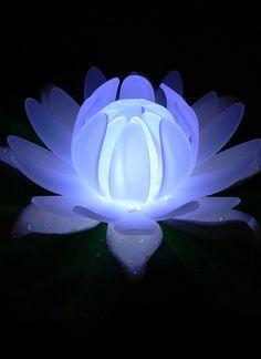 LED LilyLytes - Floating Lotus Lily Lights
