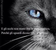 Italian Quotes, Great Words, Cat Art, Humor, Eyes, Animals, Anonymous, Type 3, Einstein