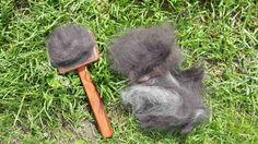 Весной многие владельцы собак сталкиваются с тем, что у их питомцев начинает выпадать шерсть. В чем причина и что делать в таком случае?