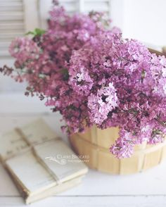 I thought my obsession with lilacs was coming to an end but obviously not. Just can't get enough! by claireb_photography