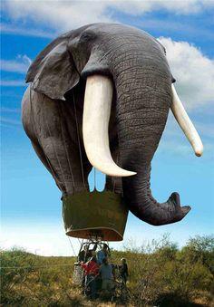 Resultados da Pesquisa de imagens do Google para http://tzr.ro/wp-content/uploads/2011/10/Elephant-baloon.jpg