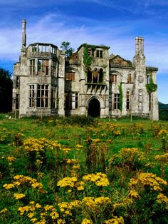 Dunboy Castle Ruins with Wildflowers in Foreground, Castletownbere, Ireland