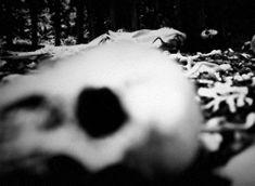 gif skulls mine horror skull horror gif