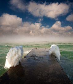 Angel wings | angel wings, ice, ocean, bridge
