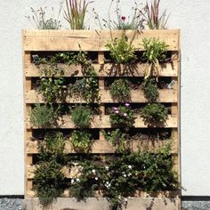 Pallet planter! Would be cool painted a bright colour.