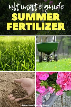 Anyone wanting to get the best garden displays should have a selection of fertilizers ready to hand through summer. Indeed, away from the border they become essential where composts hold only limited nutrients for basket and container plants. Fertilizer, Different Plants, Grass Fertilizer, Foliage Plants, Perennial Flowering Plants, Fast Growing Plants, Plant Roots, Plant Nutrients, Amazing Gardens