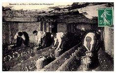 Fascinating! Mushroom farms in the Paris catacombs