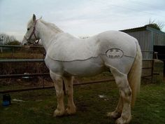 Batman symbol Clipped Horses Learn about #HorseHealth #HorseColicwww.loveyour.horse