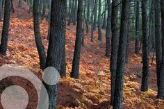 Guía Reserva Natural Valle de Iruelas - Information for your visit in www.qnatur.com