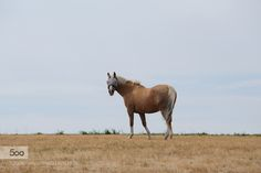 Horse... by pasha777. Please Like http://fb.me/go4photos and Follow @go4fotos Thank You. :-)