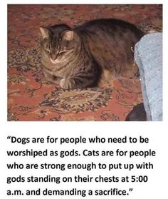 https://www.facebook.com/CatShitPics/photos/a.682869598444566.1073741828.682865185111674/1174899145908273/?type=3