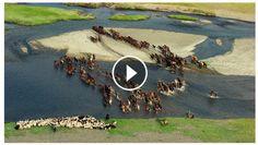 Sublime video tirée du film Human de Yann Arthus Bertrand - la Mongolie, magnifique... http://www.rando-cheval-mongolie.com/