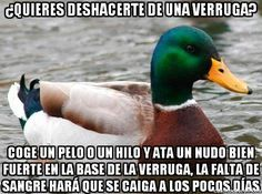 actual advice mallard meme 6 Great nuggets of wisdom from the Actual Advice Mallard Photos) Gold Mine, Funny Stuff, Funny Things, Funny Pics, Funny Humor, Funny Shit, Random Stuff, It's Funny, Funny Images