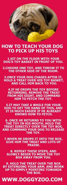 Hmmm, this looks interesting! How to teach your dog to pick up his toys...