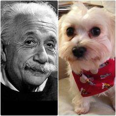 Quote Off between Henry Smith and Albert Einstein www.everybodylovessammy.com