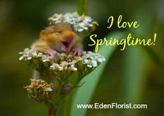 I love Springtime! How about you?