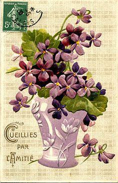 beautiful violette