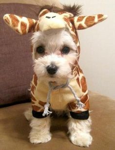 83 best pawsome pets images on pinterest funny animal funny giraffe pup pet costume so cute dog halloween costume puppy giraffe costume solutioingenieria Images