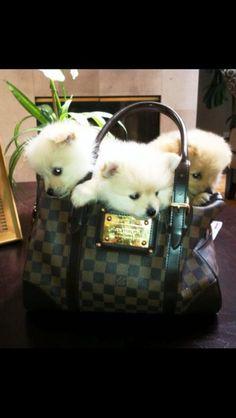 My baby poms!!! Love them :)))