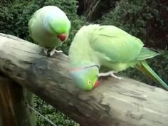 Anyone here speaking fluently bird language? What are talking about?