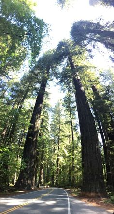 Avenue of the Giants, Redwoods National & State Parks, California, USA