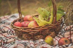 Apples and Plaid- Autumn Cozy