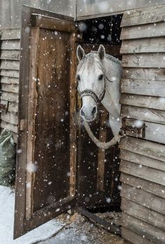 Christmas #snowscenes