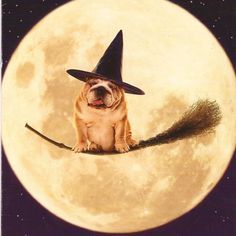 #English #Bulldog #Halloween #dogs #pets #animals