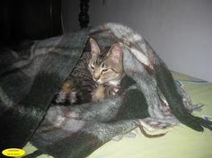 Ti Uma gatinha muito dengosa. Lorena-SP