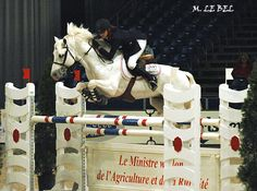 Dexter Leam Pondi, Connemara Stallion