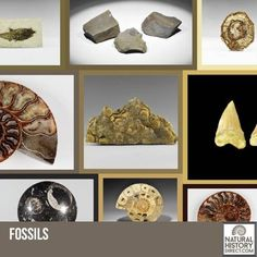 Fossils - Shop the collection, website updated daily, click here now www.NaturalHistoryDirect.com