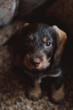 Crank up the adorable on Facebook Page by packing your feed with cute animals. #Puppy #dog #lovely https://www.facebook.com/petshooter