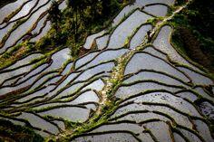 WETLAND: A man crossed terraced fields Sunday in Loudi, Hunan province, China. (Liu Aicheng/Xinhua/Zuma Press)