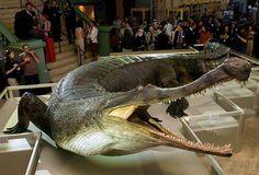 Sarcosuchus Imperator - Pesquisa Google