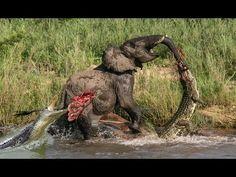 beautiful wild animals in action - Google zoeken