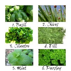 How to Use Fresh Herbs in Cooking + How to Store Them