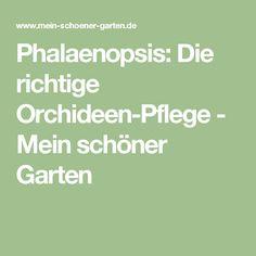 Phalaenopsis: Die richtige Orchideen-Pflege - Mein schöner Garten