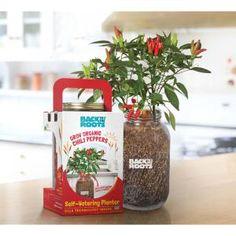 Back to the Roots Windowsill Organic Chili Pepper Grow Kit Mushroom Grow Kit, Organic Nutrients, Planting Vegetables, Vegetable Gardening, Regrow Vegetables, Veggies, Hydroponic Gardening, Growing Vegetables, Organic Gardening