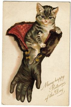 Helena Maguire cat in glove vintage postcard