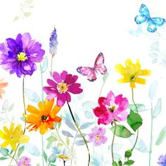 Harrison Ripley - _Butterflys & Mixed Floral Final