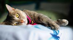 sweetest cat orange eyes wallpaper free full hd size download
