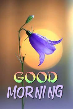 Good Morning In Hindi, Good Morning Nature, Good Morning Images Flowers, Good Morning Roses, Good Morning Cards, Latest Good Morning, Good Morning Prayer, Good Morning Funny, Good Morning Greetings
