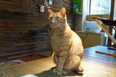 Cat Travel: Neko no Jikan Amemura – Osaka Cat Cafe Part 4