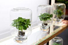 Hydroponic Gardening, Hydroponics, Container Gardening, Garden Compost, Greenhouse Gardening, Indoor Garden, Indoor Plants, Inside Garden, Plant Aesthetic